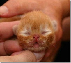The beautiful tiny Cat – Adorable Pictures