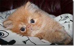 kitty-15[1]