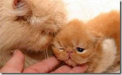 kitty-3[1]