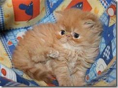 kitty-7[1]